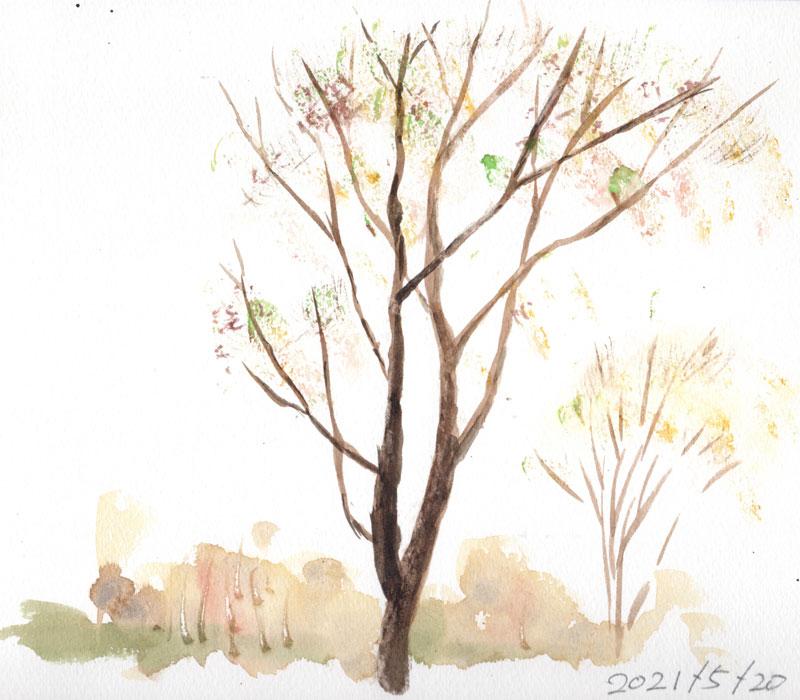 紅葉する落葉樹