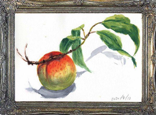 市場には出回らない幻の橙色をした桃(painted on Sep.13,2020)