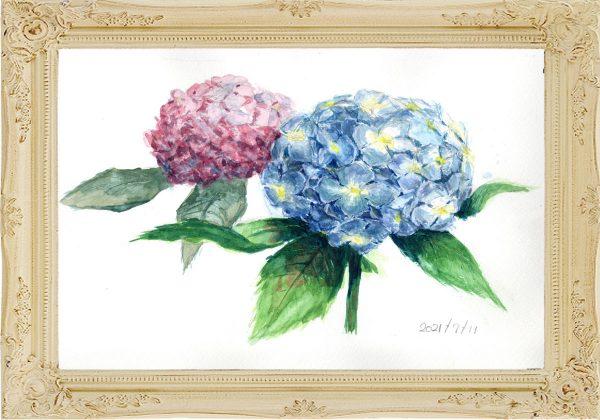 紫陽花2輪(painted on Jul.11,2021)