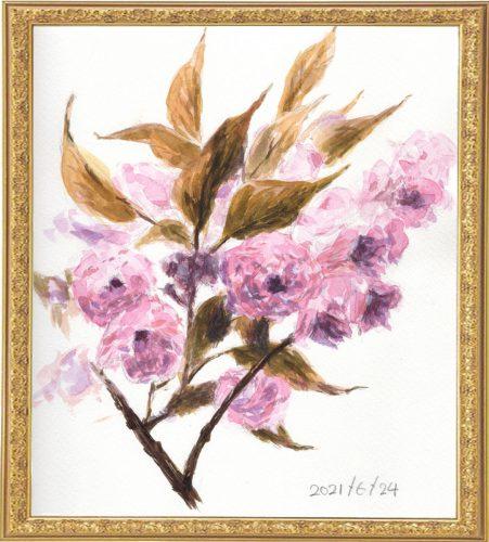 八重桜(painted on Jun.24,2021)